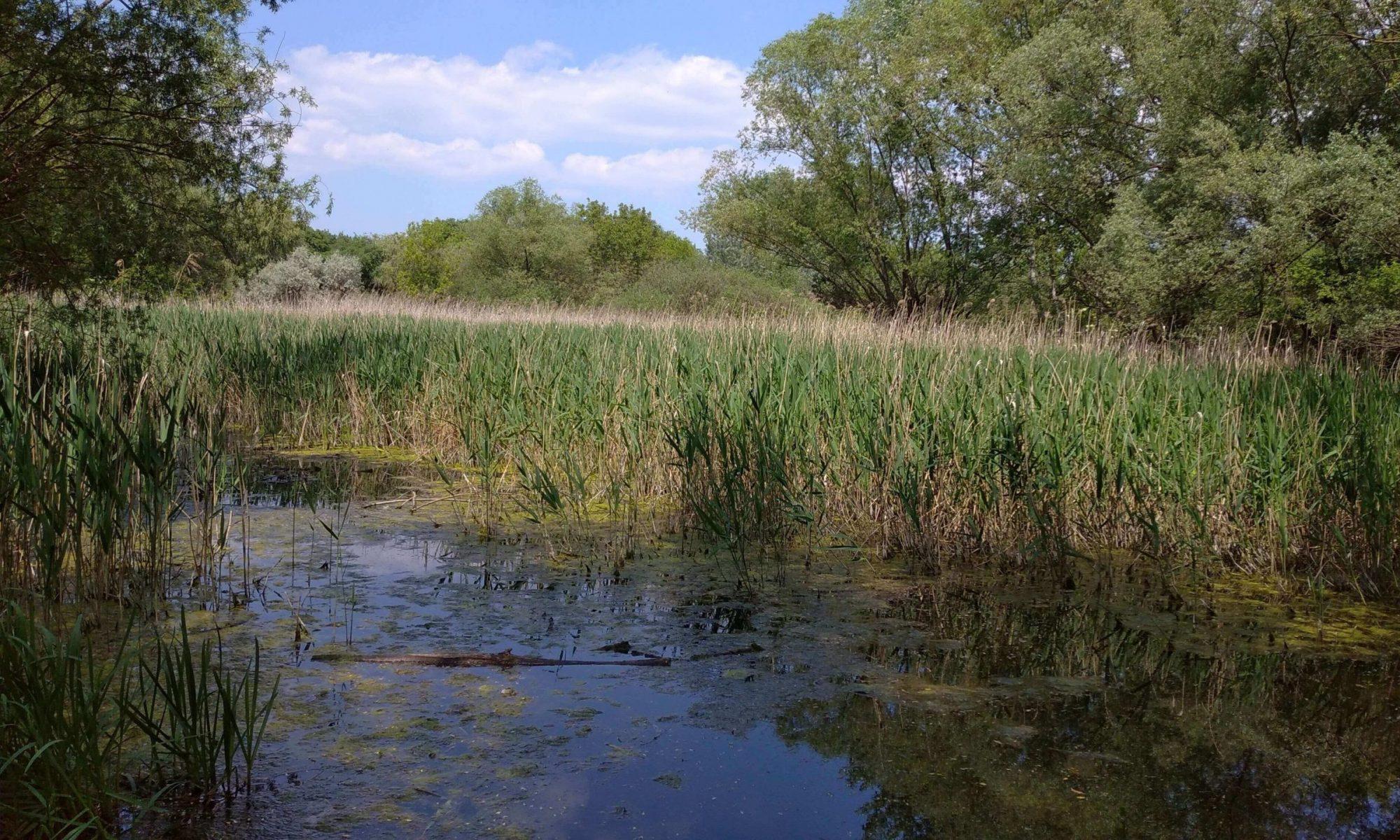 Szilas-tó